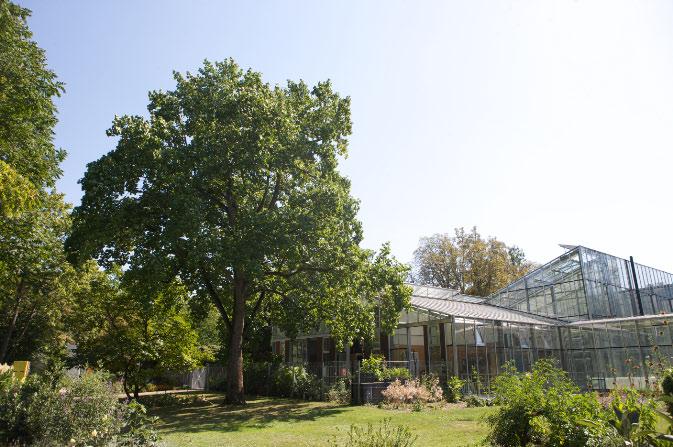 Der Pflanzenbestand beträgt heute rund 8.000 Arten. Im Hintergrund steht ein Gewächshaus © P. Mesenholl 2009