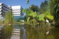 In der Außenanlage befinden sich Blumen, Gräser und auch ein Teich © P. Mesenholl 2009