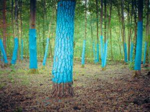 Markierte Bäume, als Beispiel um den CO2–Ausstoß eines Berliner darzustellen